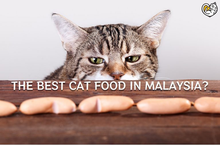 Why Freeze-Dried Cat Food Is the Best Cat Food in Malaysia?