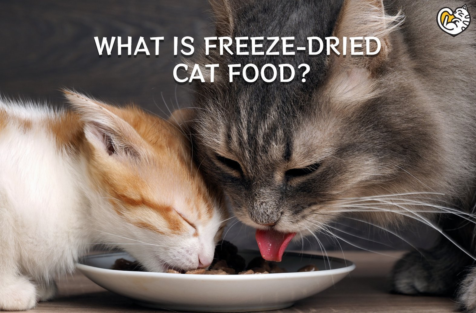 WHAT IS FREEZE-DRIED CAT FOOD?