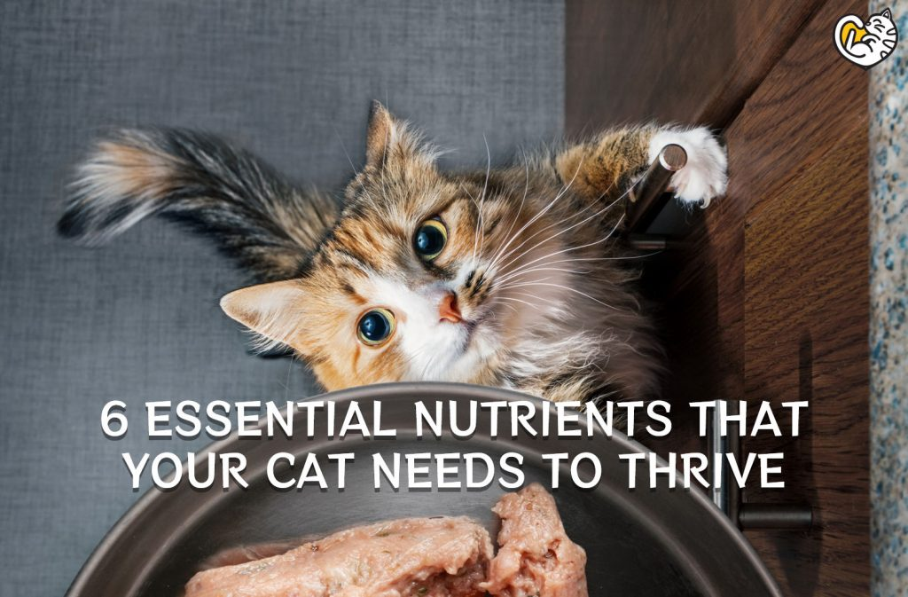 6 Essential Nutrients that Your Cat Needs to Thrive