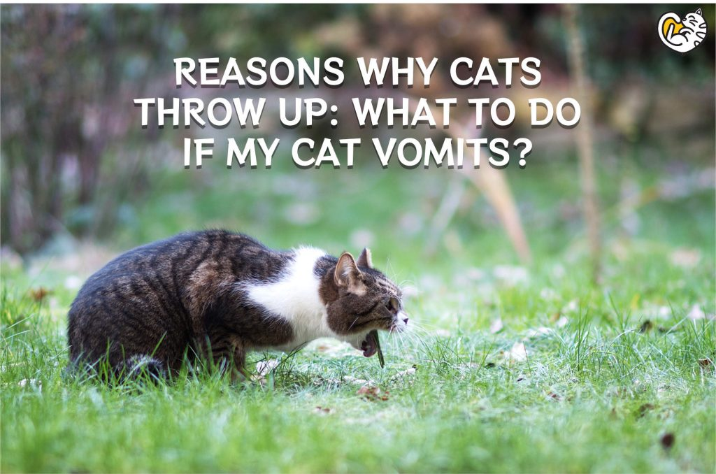 Reasons Why Cats Throw Up: What to Do if My Cat Vomits?